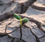 COVID & Climate Change: Why I am Hopeful